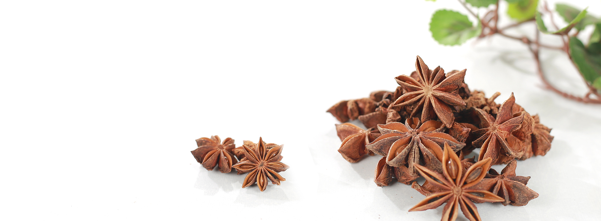 Slide 2 Star Anise